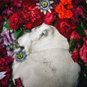 Lire la suite de l'article cérémonies laiques personnalisées Deuil de votre animal domestique •Célébrer la Vie, Life-Cycle Célébrant® à Lyon